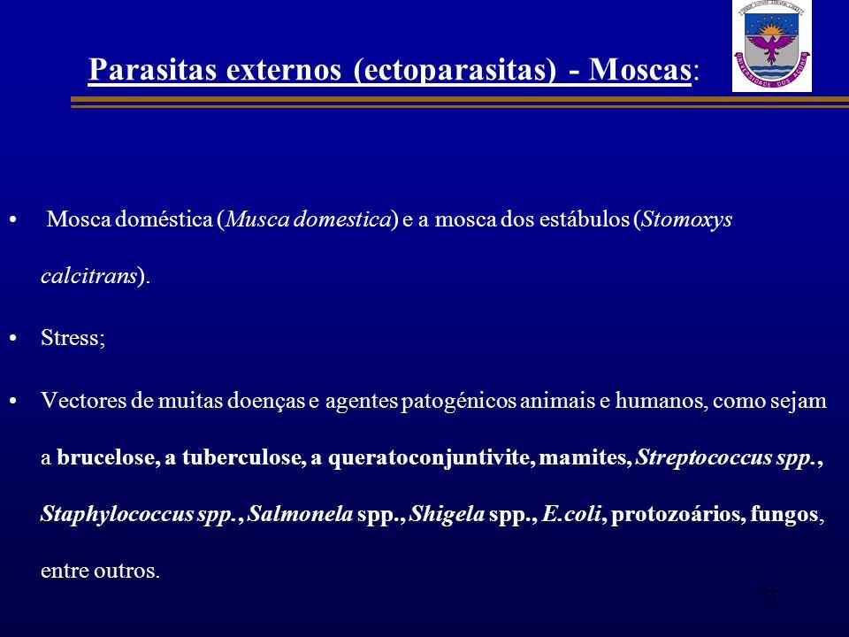 Parasitas externos (ectoparasitas) - Moscas: Mosca doméstica (Musca domestica) e a mosca dos estábulos (Stomoxys calcitrans). Stress; Vectores de muit