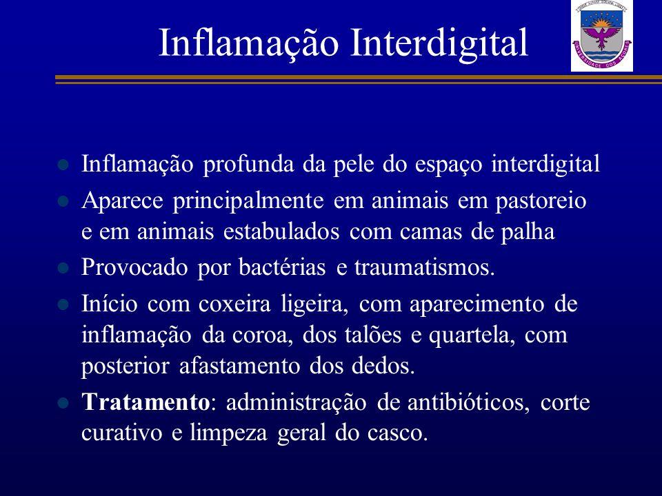 Inflamação Interdigital Inflamação profunda da pele do espaço interdigital Aparece principalmente em animais em pastoreio e em animais estabulados com