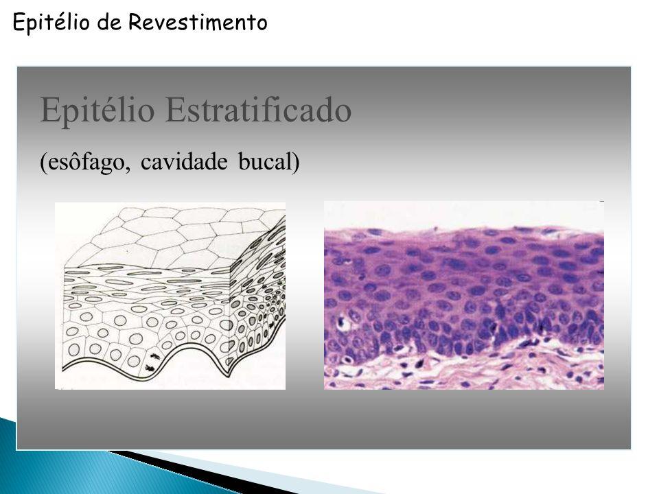 Epitélio de Revestimento Epitélio Pseudoestratificado Ciliado (Número) (Especialização) Faixa de citoplasma superficial Cílios não ocorrem em epitélio estratificado (trato respiratório)