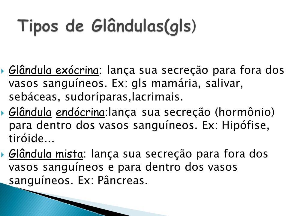 Glândula exócrina : lança sua secreção para fora dos vasos sanguíneos. Ex: gls mamária, salivar, sebáceas, sudoríparas,lacrimais. Glândula endócrina :