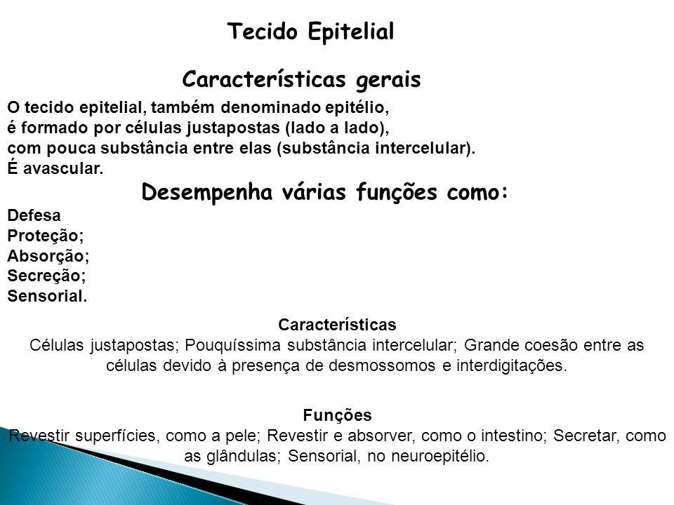 Tecido Epitelial Características gerais O tecido epitelial, também denominado epitélio, é formado por células justapostas (lado a lado), com pouca sub