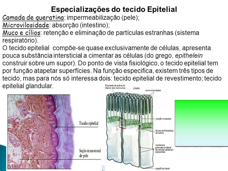 Grupos de células especializadas e semelhantes entre si, que desempenham funções específicas no organismo.