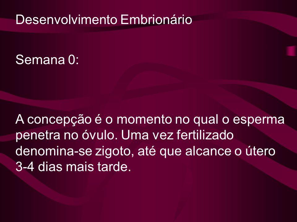 Desenvolvimento Embrionário Semana 0: A concepção é o momento no qual o esperma penetra no óvulo. Uma vez fertilizado denomina-se zigoto, até que alca
