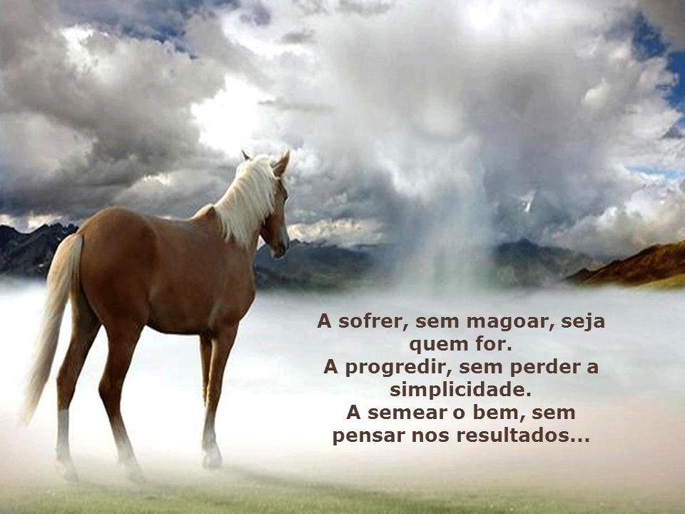A sofrer, sem magoar, seja quem for.A progredir, sem perder a simplicidade.