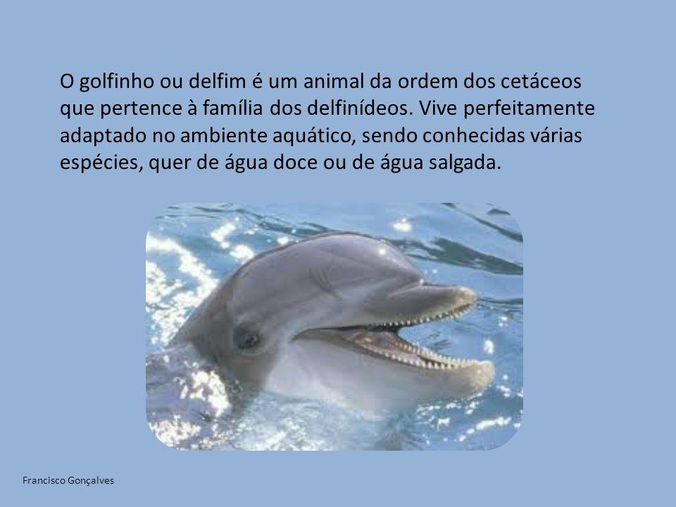 O golfinho ou delfim é um animal da ordem dos cetáceos que pertence à família dos delfinídeos. Vive perfeitamente adaptado no ambiente aquático, sendo