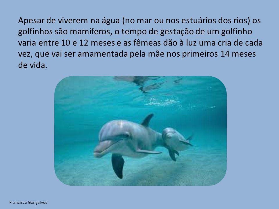 Apesar de viverem na água (no mar ou nos estuários dos rios) os golfinhos são mamíferos, o tempo de gestação de um golfinho varia entre 10 e 12 meses