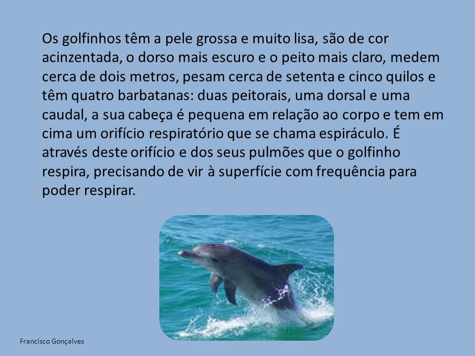 Os golfinhos têm a pele grossa e muito lisa, são de cor acinzentada, o dorso mais escuro e o peito mais claro, medem cerca de dois metros, pesam cerca