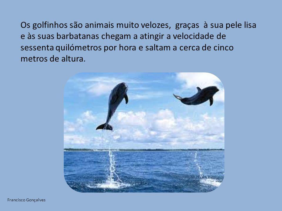 Os golfinhos são animais muito velozes, graças à sua pele lisa e às suas barbatanas chegam a atingir a velocidade de sessenta quilómetros por hora e s