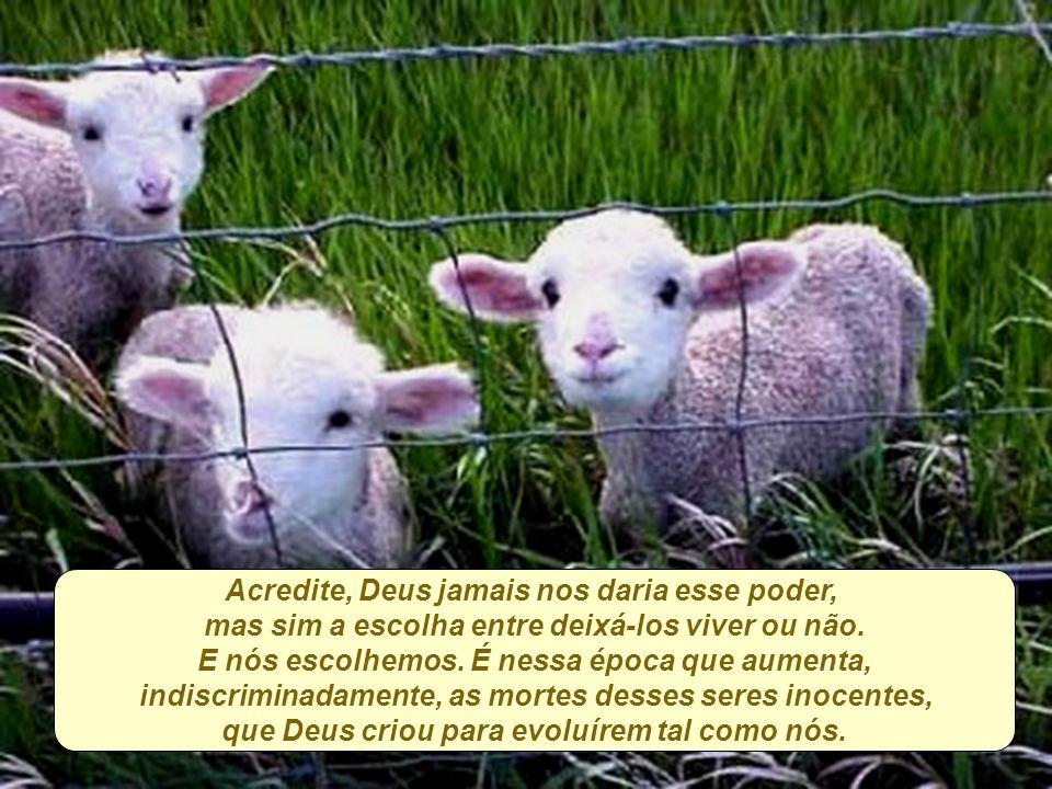 Acredito que muitos ainda não tenham se dado conta disso, por acreditarem que Deus fez os animais para que nós, também filhos de Deus, os matássemos, para comemorar a vinda do Cristo.