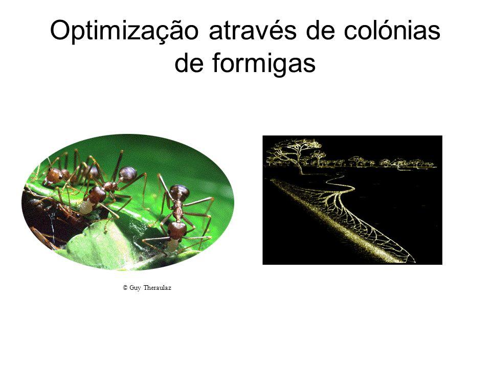 Optimização através de colónias de formigas © Guy Theraulaz