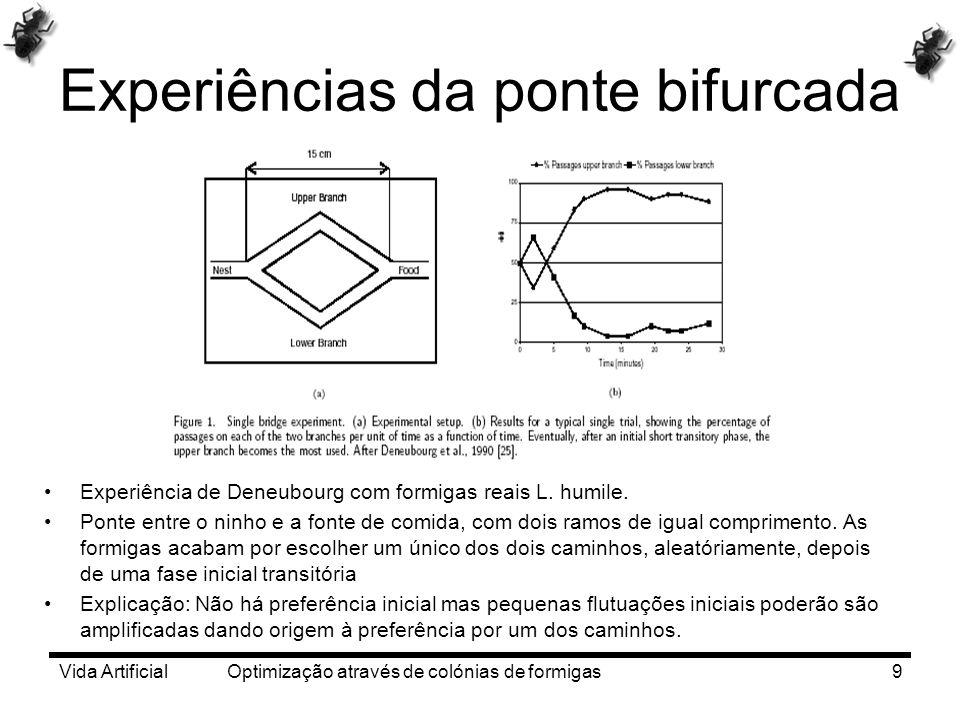 Vida Artificial Optimização através de colónias de formigas9 Experiências da ponte bifurcada Experiência de Deneubourg com formigas reais L. humile. P