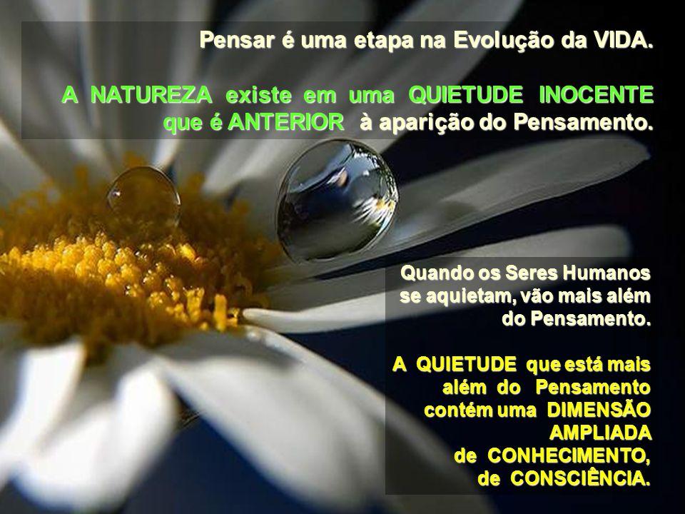 Quando você reconhece a SACRALIDADE, a BELEZA, a incrível QUIETUDE e DIGNIDADE nas quais uma Flor ou uma Árvore existem, VOCÊ AGREGA ALGO a essa Flor
