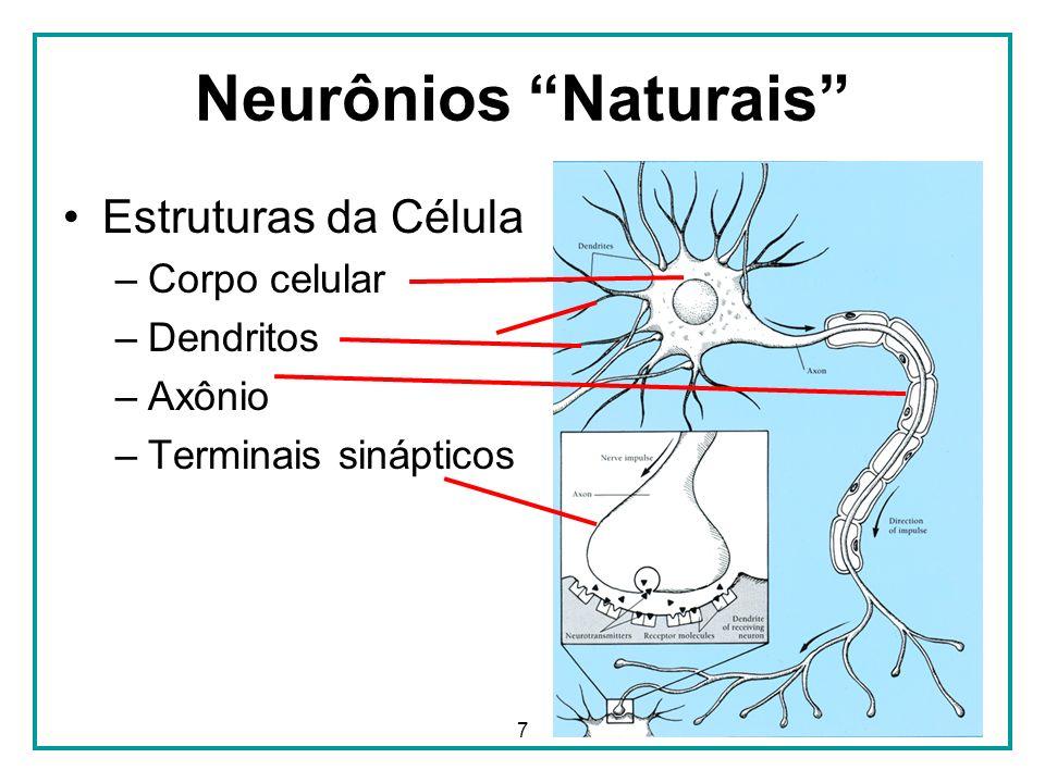 7 Neurônios Naturais Estruturas da Célula –Corpo celular –Dendritos –Axônio –Terminais sinápticos