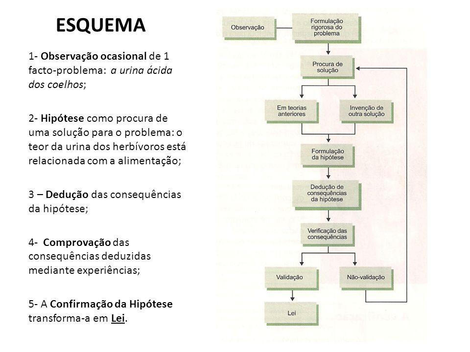 ESQUEMA 1- Observação ocasional de 1 facto-problema: a urina ácida dos coelhos; 2- Hipótese como procura de uma solução para o problema: o teor da uri