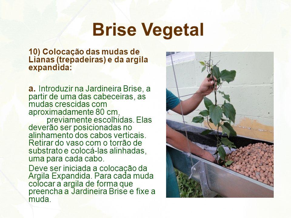 10) Colocação das mudas de Lianas (trepadeiras) e da argila expandida: a. Introduzir na Jardineira Brise, a partir de uma das cabeceiras, as mudas cre
