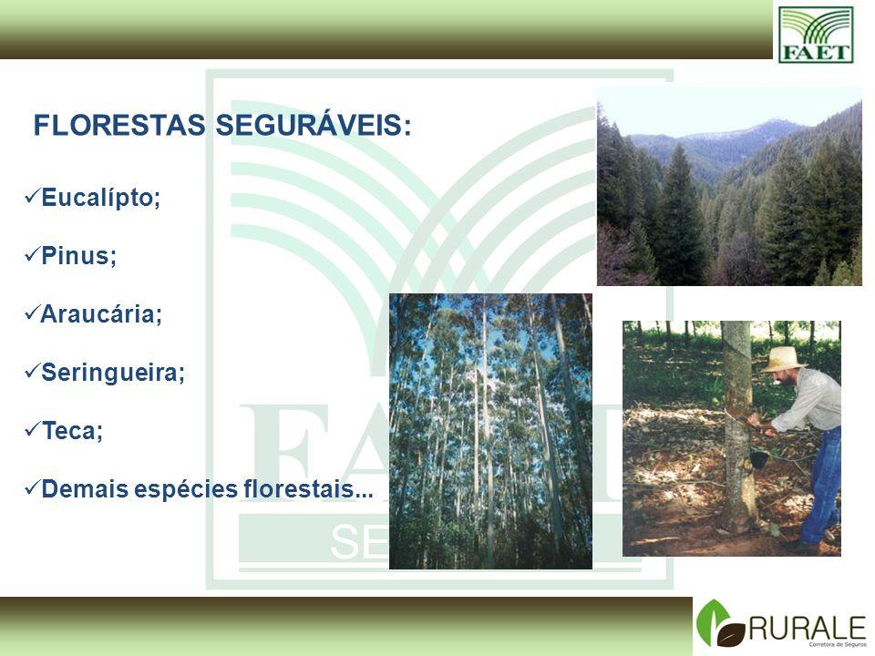 FLORESTAS SEGURÁVEIS: Eucalípto; Pinus; Araucária; Seringueira; Teca; Demais espécies florestais...