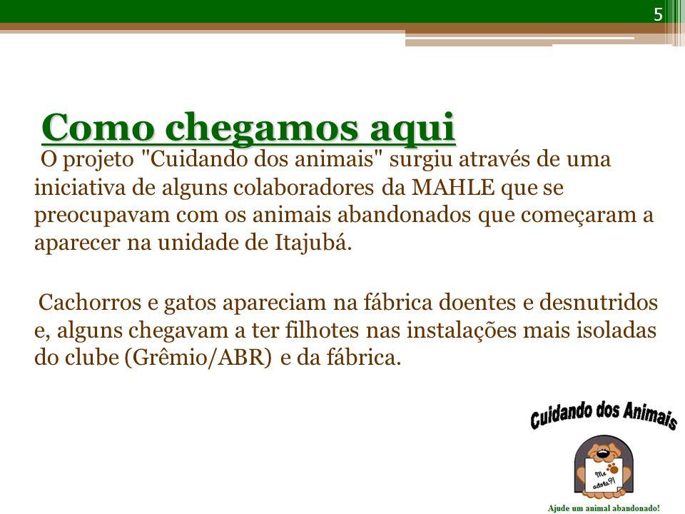 Como chegamos aqui O projeto Cuidando dos animais surgiu através de uma iniciativa de alguns colaboradores da MAHLE que se preocupavam com os animais abandonados que começaram a aparecer na unidade de Itajubá.