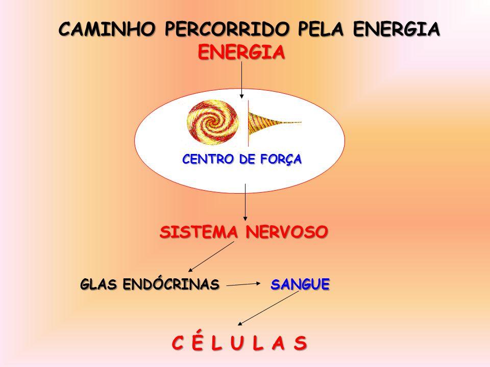 CENTRO DE FORÇA CAMINHO PERCORRIDO PELA ENERGIA ENERGIA ENERGIA SISTEMA NERVOSO SISTEMA NERVOSO GLAS ENDÓCRINAS SANGUE GLAS ENDÓCRINAS SANGUE C É L U L A S C É L U L A S