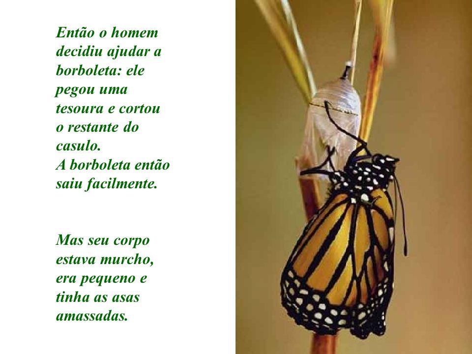 Então o homem decidiu ajudar a borboleta: ele pegou uma tesoura e cortou o restante do casulo. A borboleta então saiu facilmente. Mas seu corpo estava