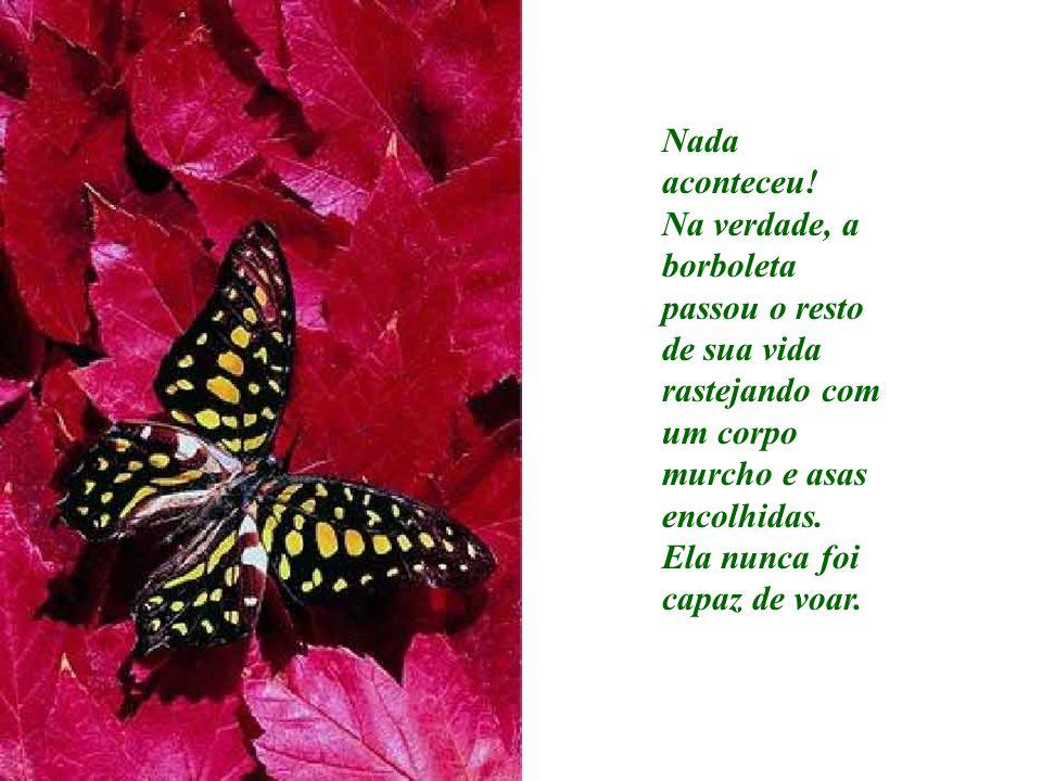 Nada aconteceu! Na verdade, a borboleta passou o resto de sua vida rastejando com um corpo murcho e asas encolhidas. Ela nunca foi capaz de voar.