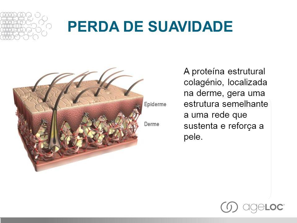 A proteína estrutural colagénio, localizada na derme, gera uma estrutura semelhante a uma rede que sustenta e reforça a pele. Derme Epiderme PERDA DE