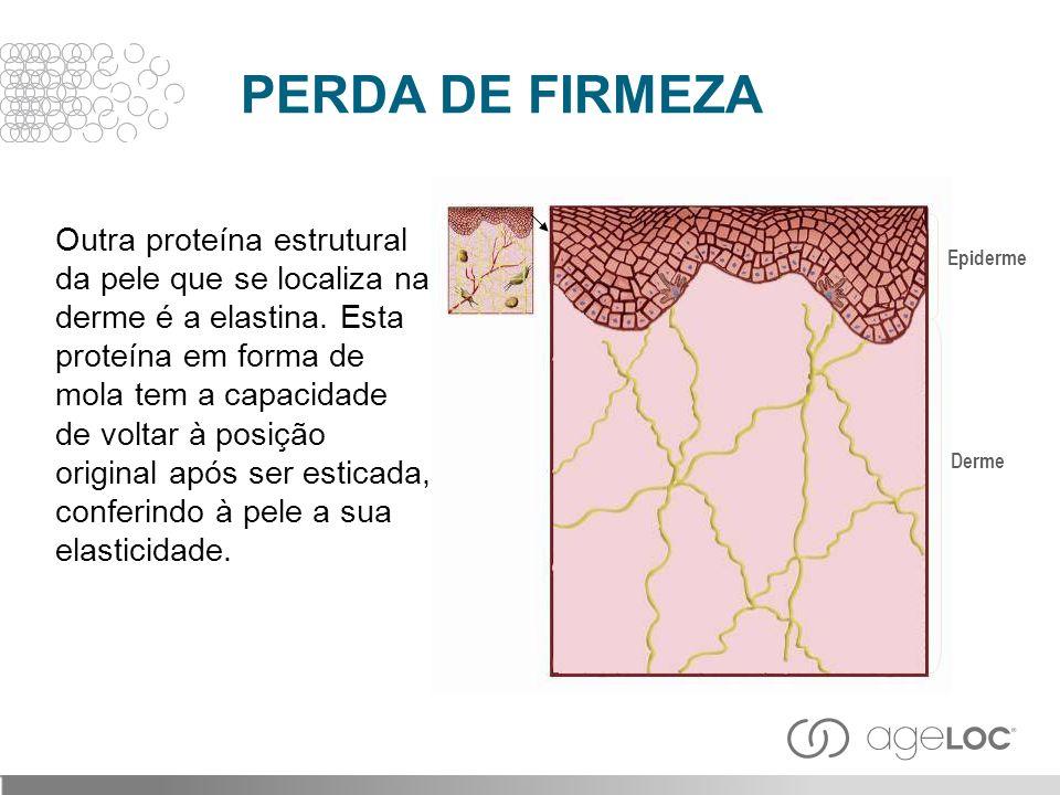 Outra proteína estrutural da pele que se localiza na derme é a elastina. Esta proteína em forma de mola tem a capacidade de voltar à posição original