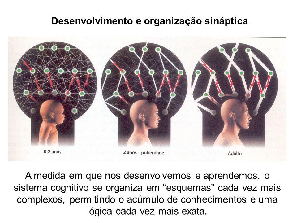 Desenvolvimento e organização sináptica A medida em que nos desenvolvemos e aprendemos, o sistema cognitivo se organiza em esquemas cada vez mais comp