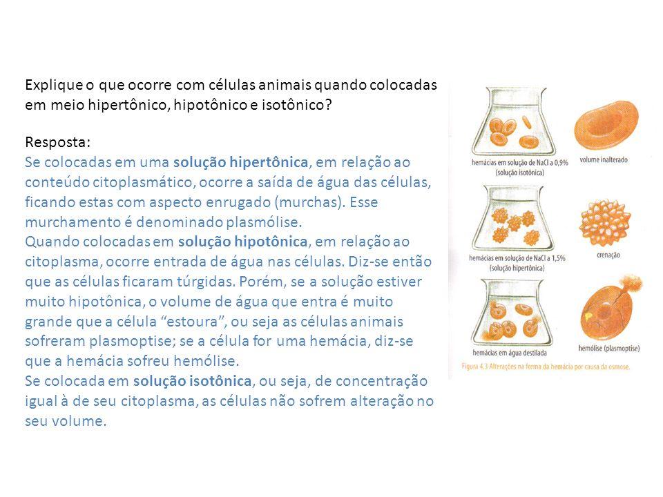 Explique o que ocorre com células animais quando colocadas em meio hipertônico, hipotônico e isotônico? Resposta: Se colocadas em uma solução hipertôn