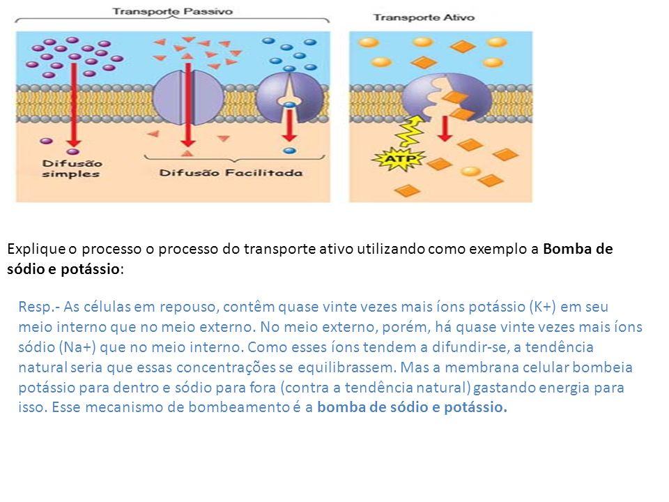 Explique o processo o processo do transporte ativo utilizando como exemplo a Bomba de sódio e potássio: Resp.- As células em repouso, contêm quase vin
