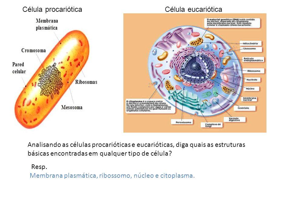 Célula procarióticaCélula eucariótica Analisando as células procarióticas e eucarióticas, diga quais as estruturas básicas encontradas em qualquer tip