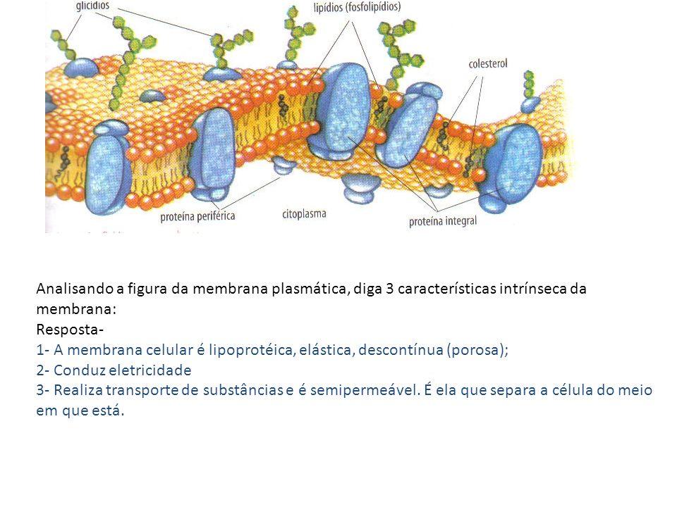 Analisando a figura da membrana plasmática, diga 3 características intrínseca da membrana: Resposta- 1- A membrana celular é lipoprotéica, elástica, d