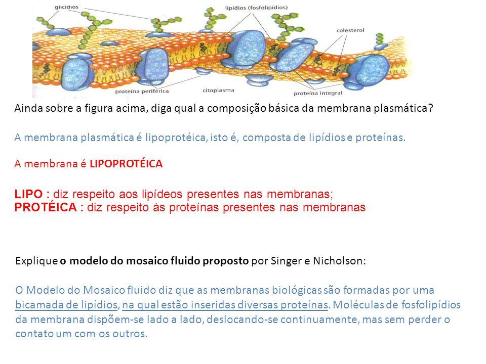 Ainda sobre a figura acima, diga qual a composição básica da membrana plasmática? A membrana plasmática é lipoprotéica, isto é, composta de lipídios e