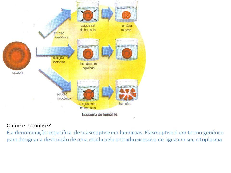 O que é hemólise? É a denominação específica de plasmoptise em hemácias. Plasmoptise é um termo genérico para designar a destruição de uma célula pela