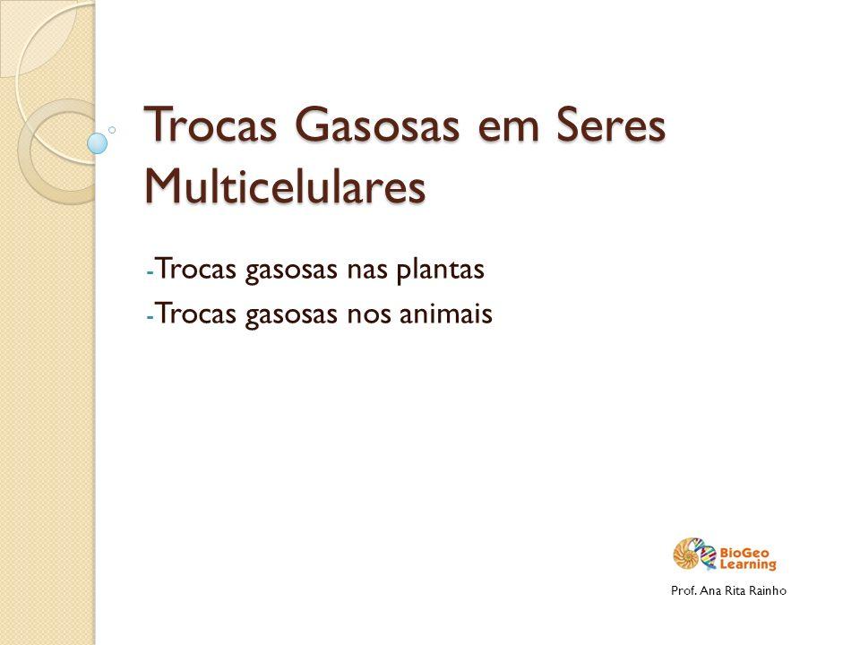 Trocas Gasosas em Seres Multicelulares - Trocas gasosas nas plantas - Trocas gasosas nos animais Prof. Ana Rita Rainho