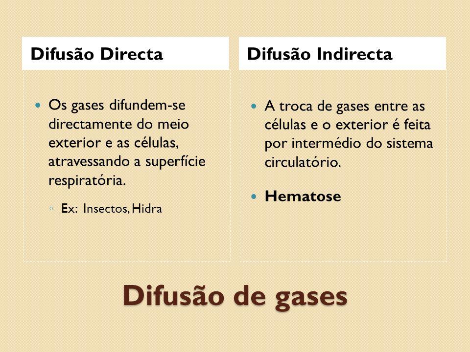 Difusão de gases Difusão DirectaDifusão Indirecta Os gases difundem-se directamente do meio exterior e as células, atravessando a superfície respirató