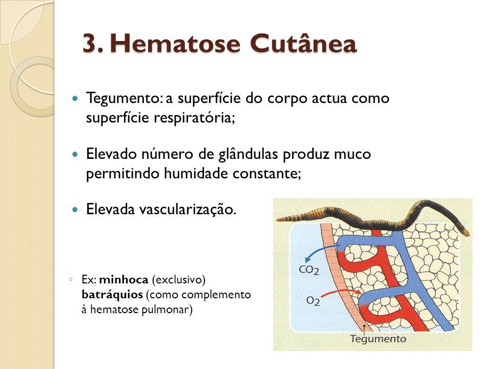 3. Hematose Cutânea Tegumento: a superfície do corpo actua como superfície respiratória; Elevado número de glândulas produz muco permitindo humidade c