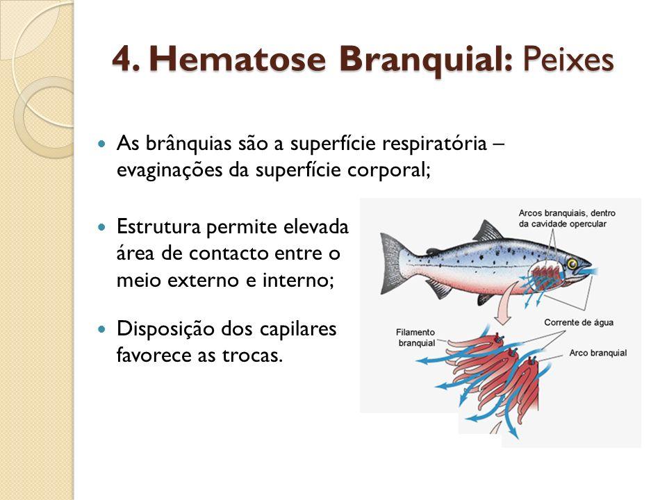 4. Hematose Branquial: Peixes Estrutura permite elevada área de contacto entre o meio externo e interno; Disposição dos capilares favorece as trocas.