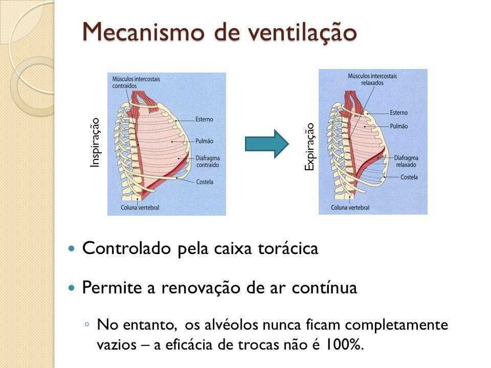 Mecanismo de ventilação Controlado pela caixa torácica Permite a renovação de ar contínua No entanto, os alvéolos nunca ficam completamente vazios – a