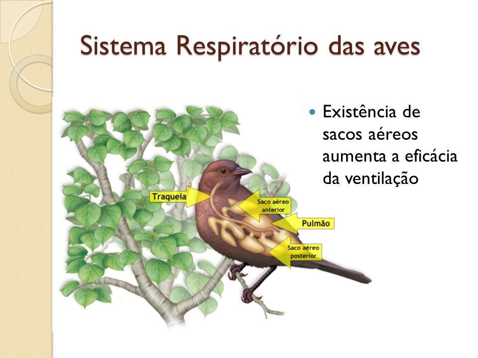 Sistema Respiratório das aves Existência de sacos aéreos aumenta a eficácia da ventilação