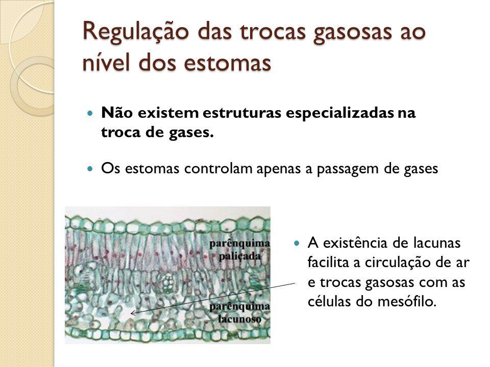 Regulação das trocas gasosas ao nível dos estomas A existência de lacunas facilita a circulação de ar e trocas gasosas com as células do mesófilo. Não