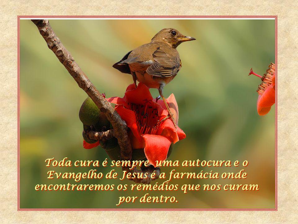 Deus nos fala através de mil modos; a enfermidade é um deles e por certo, o principal recado que lhe chega da sabedoria divina é que está faltando mai