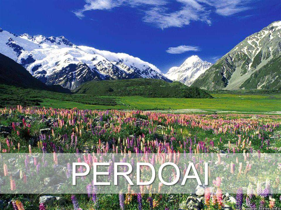 PERDOAI