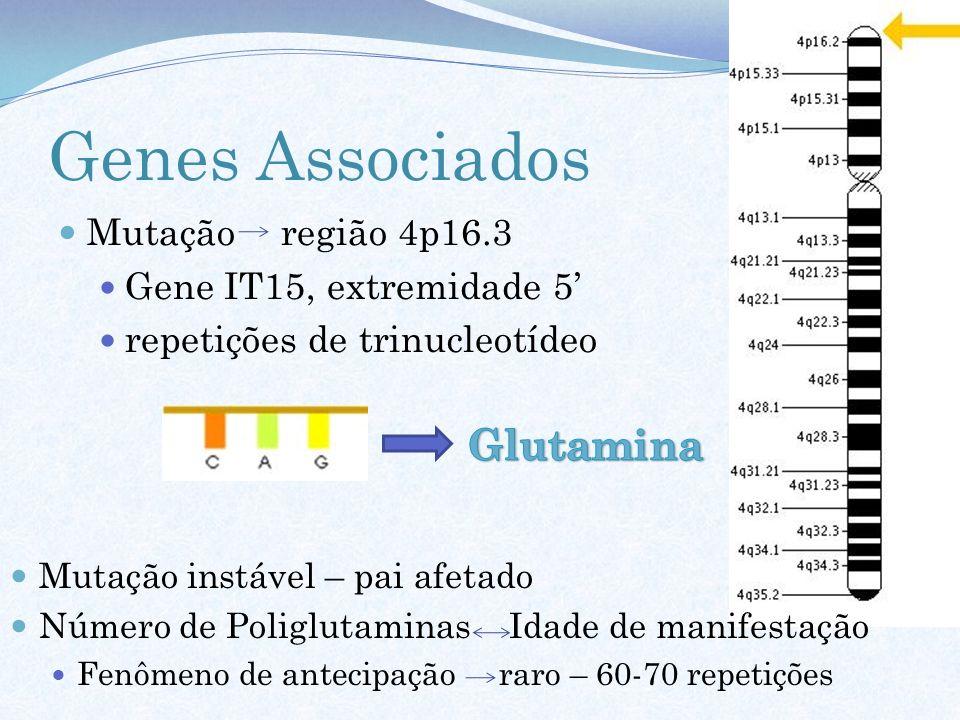 Genes Associados Mutação região 4p16.3 Gene IT15, extremidade 5 repetições de trinucleotídeo Mutação instável – pai afetado Número de Poliglutaminas I