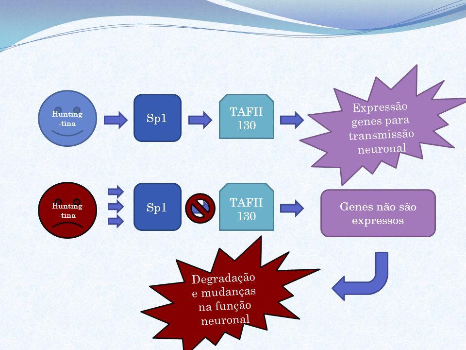 Hunting -tina Sp1 TAFII 130 Hunting -tina Sp1 TAFII 130 Expressão genes para transmissão neuronal Genes não são expressos Degradação e mudanças na fun