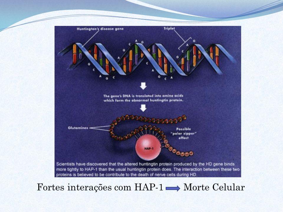 Fortes interações com HAP-1 Morte Celular