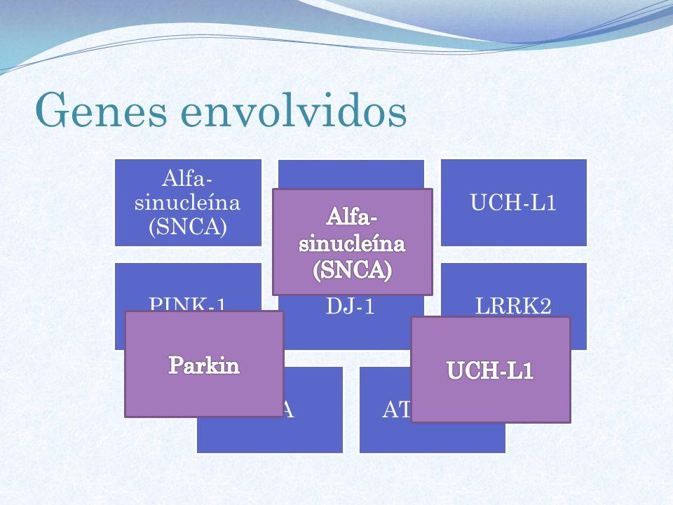 Genes envolvidos Alfa- sinucleína (SNCA) Parkin UCH-L1 PINK-1DJ-1LRRK2 GBAATP13A2
