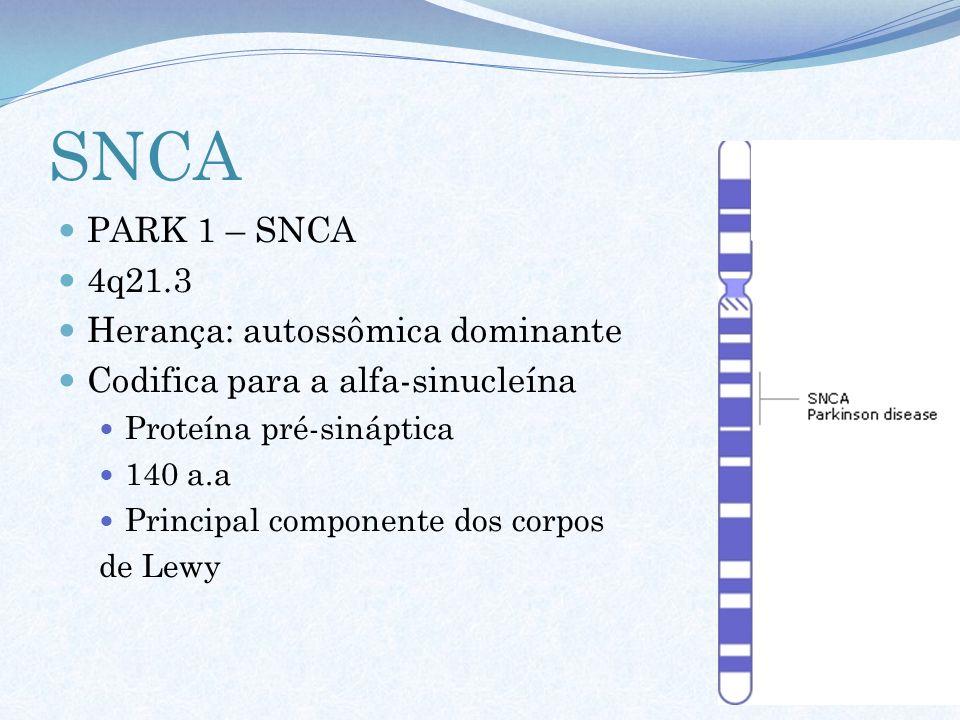SNCA PARK 1 – SNCA 4q21.3 Herança: autossômica dominante Codifica para a alfa-sinucleína Proteína pré-sináptica 140 a.a Principal componente dos corpo