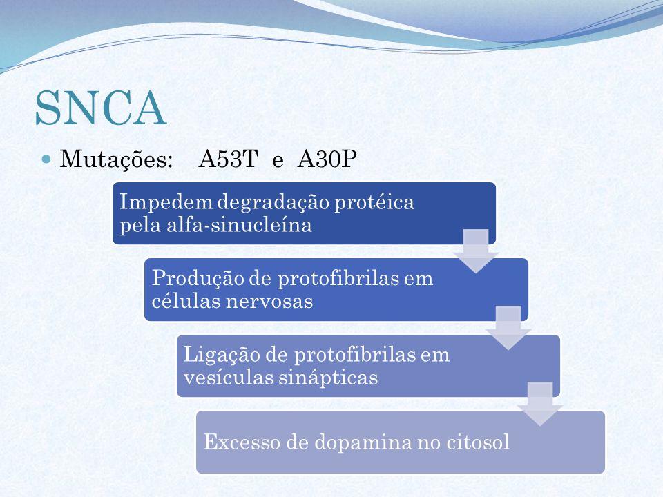 SNCA Mutações: A53T e A30P Impedem degradação protéica pela alfa-sinucleína Produção de protofibrilas em células nervosas Ligação de protofibrilas em