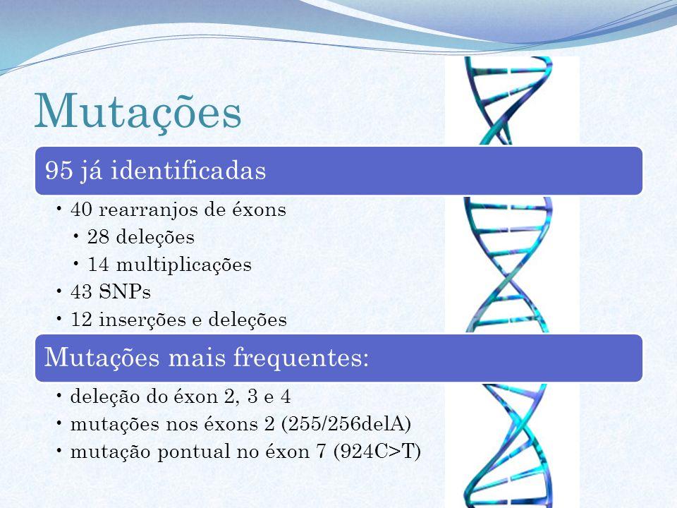 Mutações 95 já identificadas 40 rearranjos de éxons 28 deleções 14 multiplicações 43 SNPs 12 inserções e deleções Mutações mais frequentes: deleção do