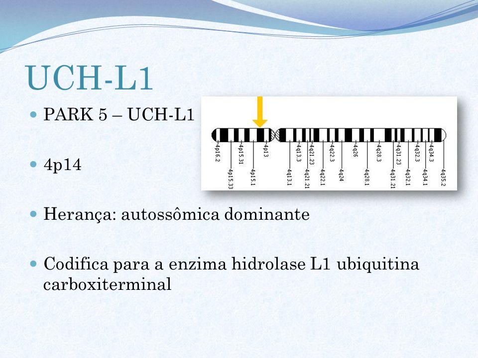 UCH-L1 PARK 5 – UCH-L1 4p14 Herança: autossômica dominante Codifica para a enzima hidrolase L1 ubiquitina carboxiterminal